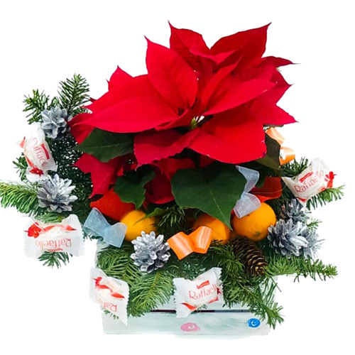 Set with christmas flowers ― Floristik — Shop online flower delivery all over Ukraine.